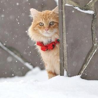 Holiday kitty.