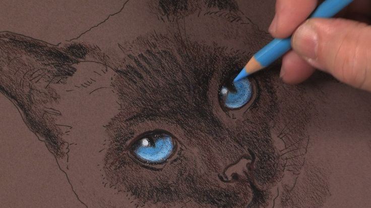 Colored Pencil Techniques: How to Draw a Cat