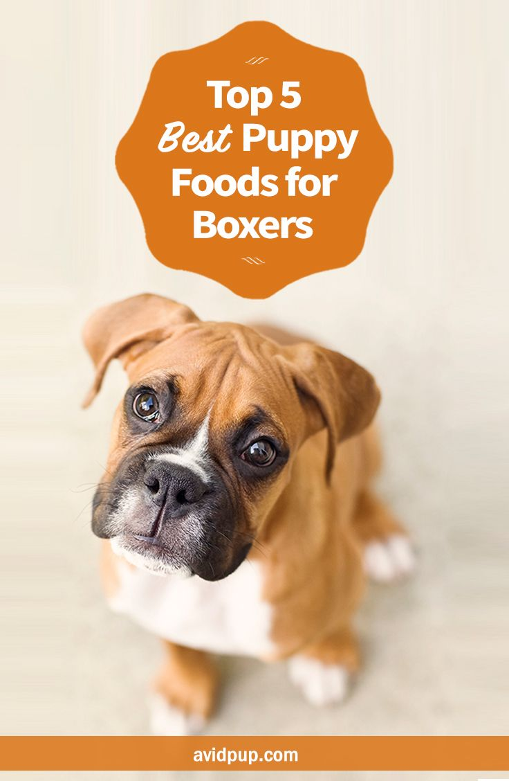 Top 5 Best Puppy Foods For Boxers Best Puppy Food Best Puppies