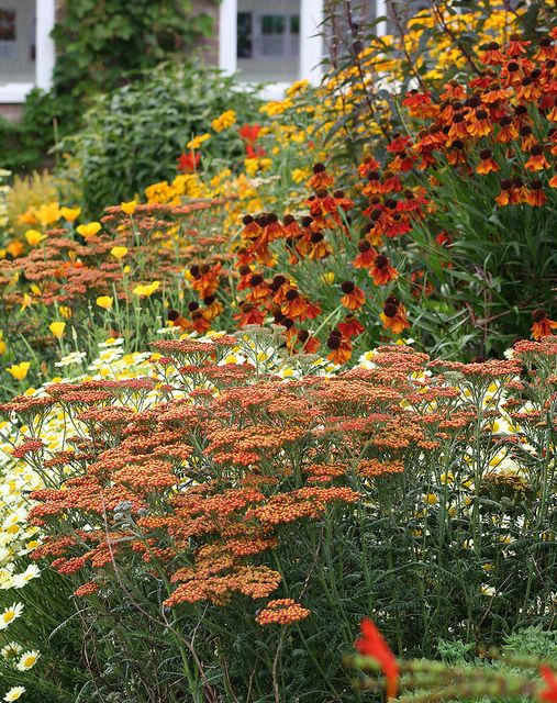 drought tolerant perennials