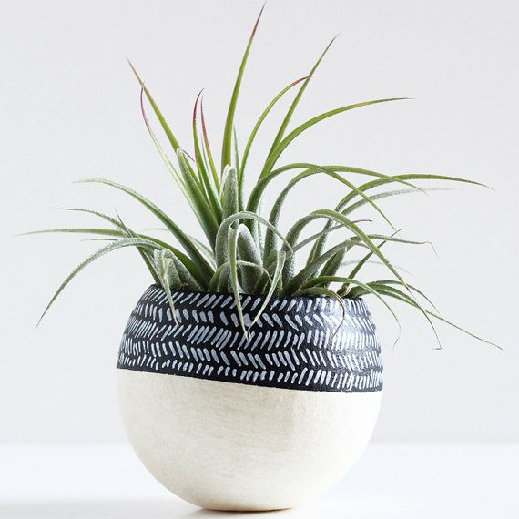 Black and White Color Block Herringbone / Chevron Air Plant Pod with Air Plant on Etsy, $20.00