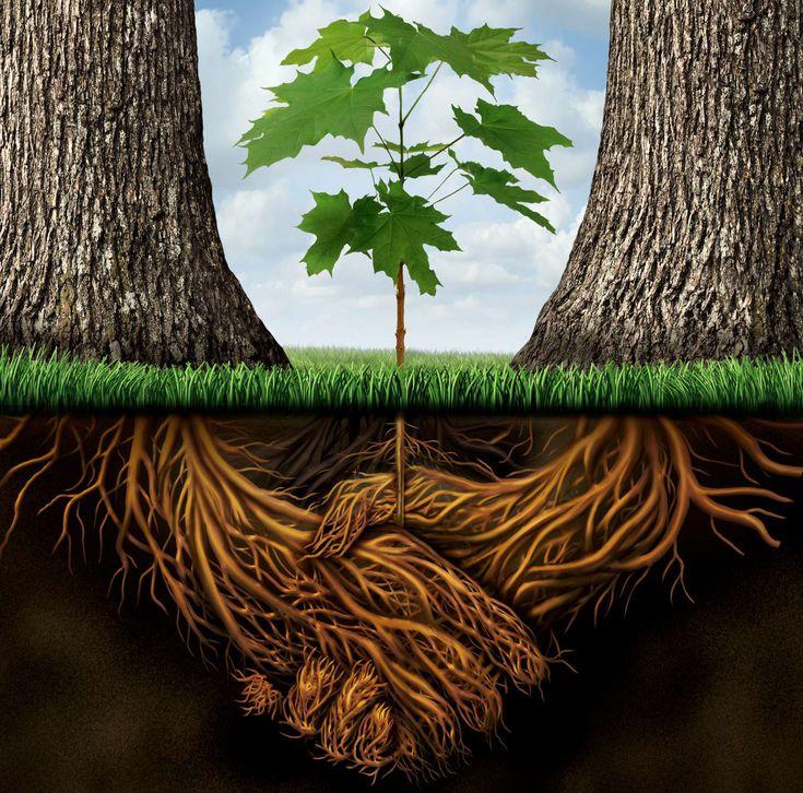 #arbre #nature #émondage #abattage #arboplus #élagage #forêt #arboriculture #paysagement