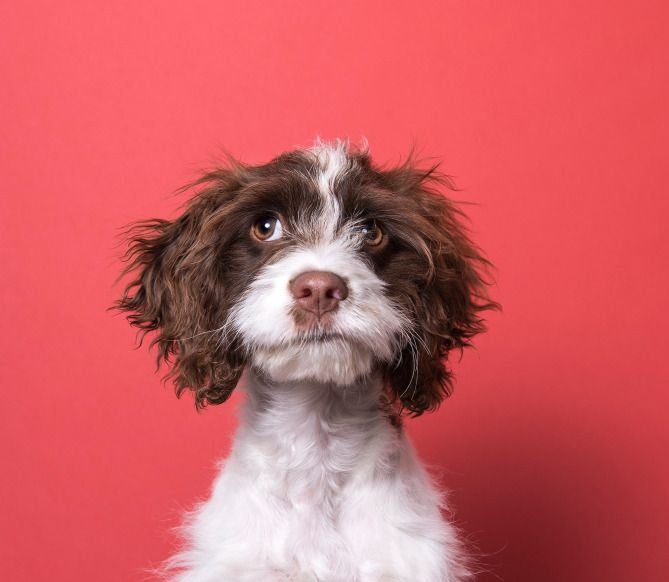 Sophie Gamand Animal Planet Puppy Bowl Photos