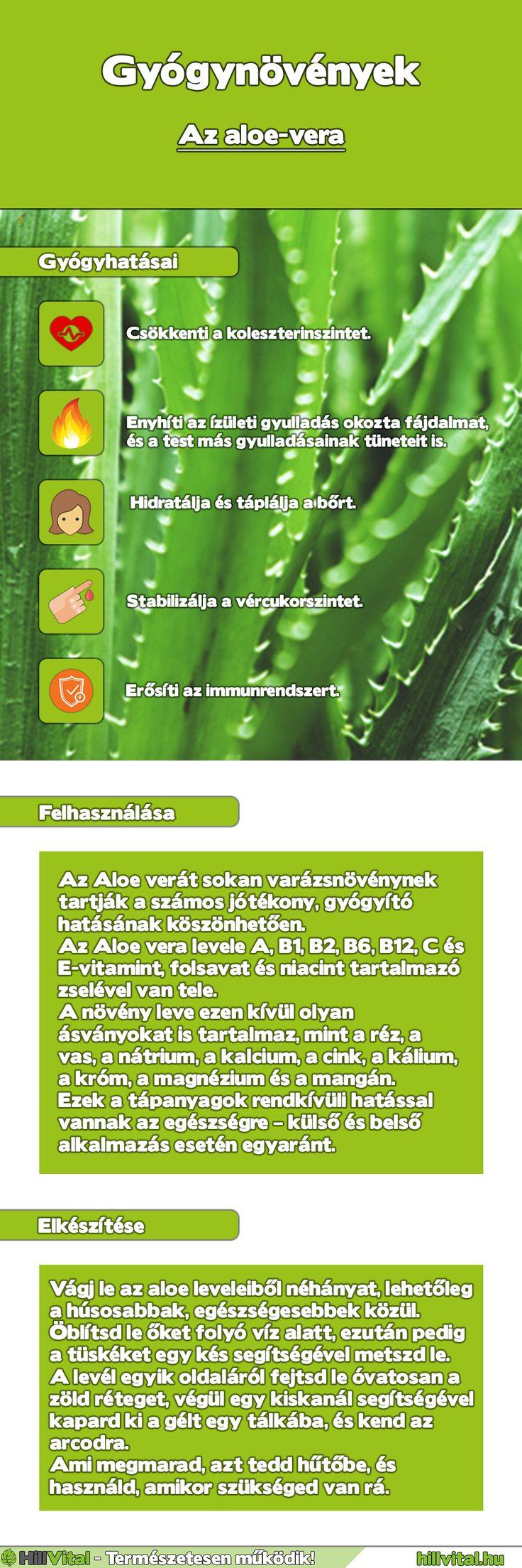 Gyógynövény határozó - Aloe-vera Az aloe-vera hatásai, aloe vera gél készítés