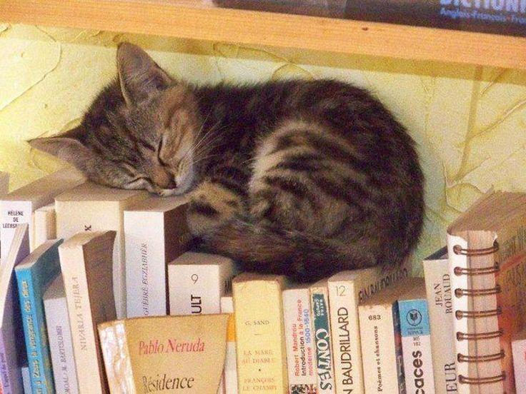 Photos de chats rigolos ou insolites