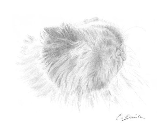 Himalayan Cat Pencil Drawing Original Hand Drawn Art by CatDKnits