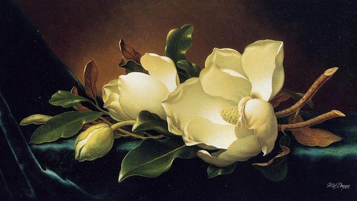 Magnolia wallpaper blooms fragrant chinese still life full hd macro high resolution Wallpaper