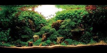 décoration aquarium maison, à voir