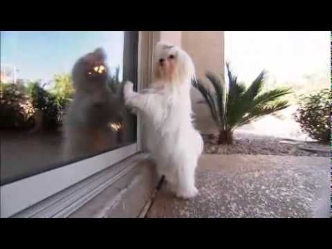 ▶ Dog Breeds 101 Video: Maltese - YouTube