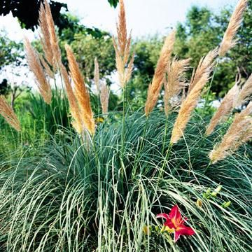 Gardens garden ideas and sun on pinterest for Small ornamental grasses for sun