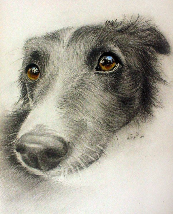 It is all about conscience by zileart on deviantart · pencil drawings of animalsdrawings