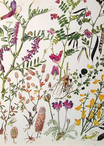 Vintage Botanical Prints Flowers | by ninainflorida
