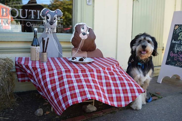 Beau at the Scarecrow Festival in Mahone Bay