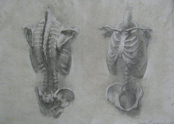 Анатомический рисунок | 464 фотографии