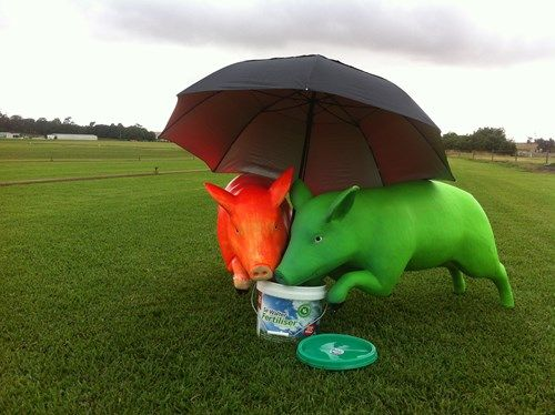 fertilise lawn turf | Lilydale Instant Turf | Love your lawn | Great grass | Lily & Dale | Follow us | Garden Tips & Advice | Contact us | Lawn Solutions Australia