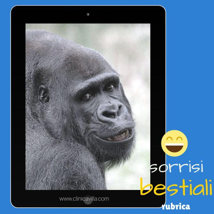 A cosa servono i canini lunghi dei gorilla? Servono per metterli in mostra, specialmente per difendersi da minacce esterne.