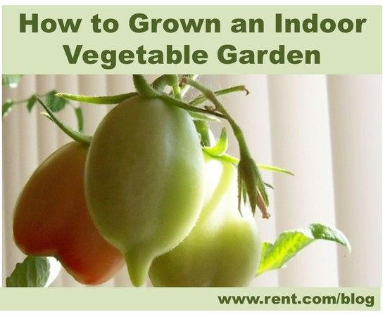How to grow an indoor vegetable garden gardens for Growing vegetables indoors