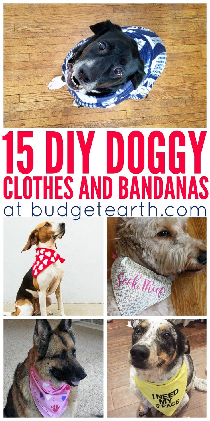 Love seeing your dogs look cute? Check out these 15 DIY Doggy Clothes & Bandanas here! http://www.budgetearth.com/15-diy-doggy-clothes-bandanas/