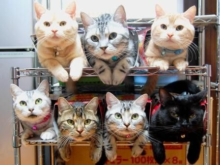 How to store & organize cats.