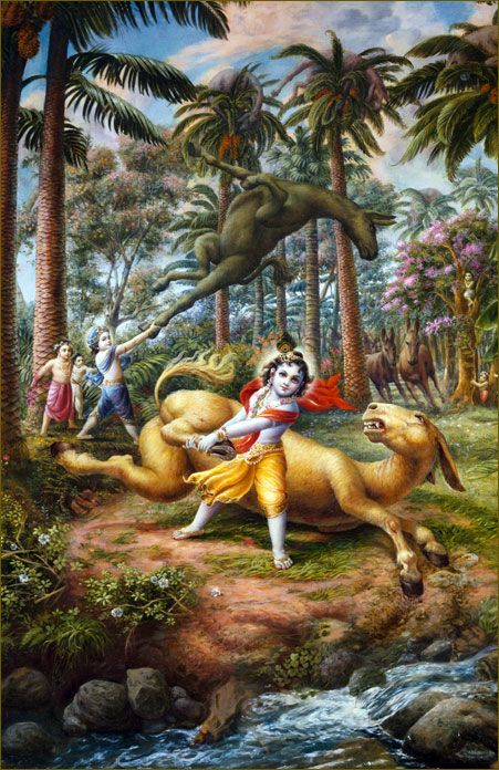 Upon hearing the sound of the falling fruits, the demon Dhenukāsura, who was living there in the form of an ass, began to approach with great force. The demon appeared first before Balarāma and began to kick His chest with his hind legs. At first, Balarāma did not say anything, but the demon with great anger began to kick Him again more vehemently. This time Balarāma immediately caught hold of the legs of the ass with one hand and, wheeling him around, threw him into the treetops.