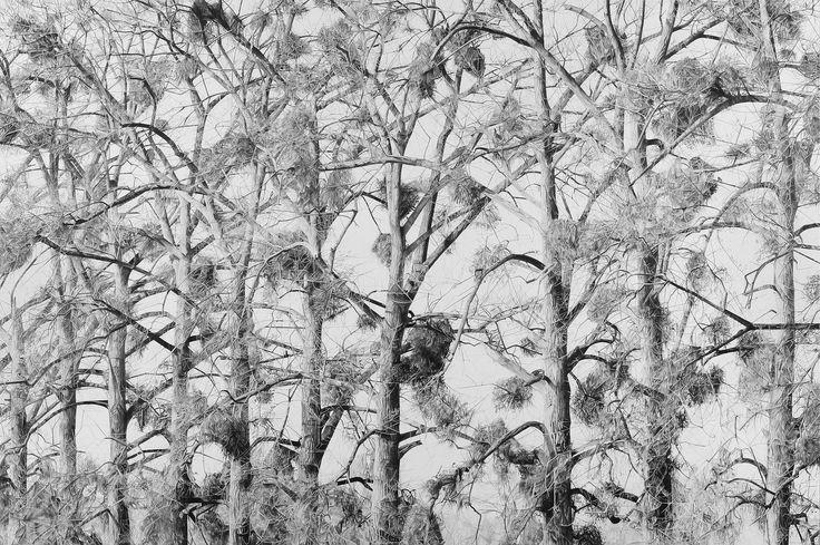 Mirjam Abraas, Graphite drawing on panel, Maertacken, 2016, 180x120 cm