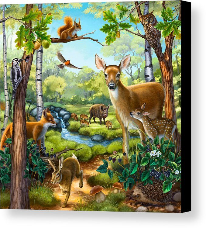 animals forest animal canvas print paintings prints painting anne wertheim pets fineartamerica sold