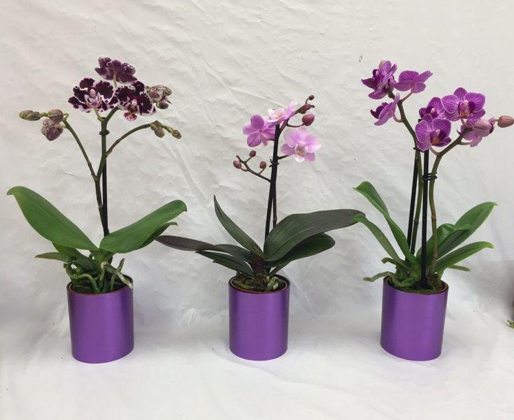 Cum salvezi o orhidee ofilita. Trucul simplu si eficient - Case practice