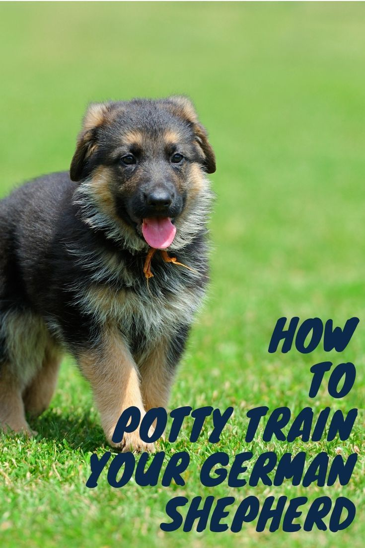 This Post Will Show You How To Potty Train Your German Shepherd