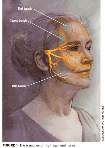 Branches of trigeminal nerve. When this nerve is inflamed, it is the worst pain EVER!!