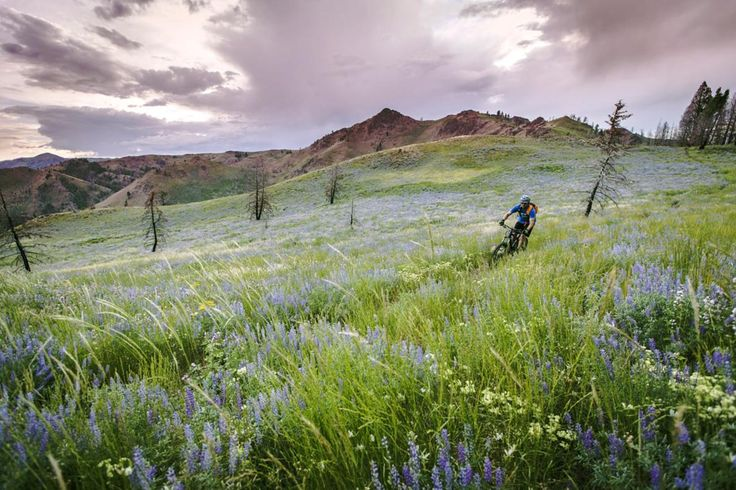 Picture of a mountain biker in Sun Valley, Idaho