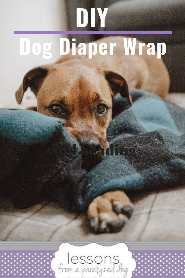 How To Make A Diy Dog Diaper Wrap Dog Diapers Dog Wrap Dogs