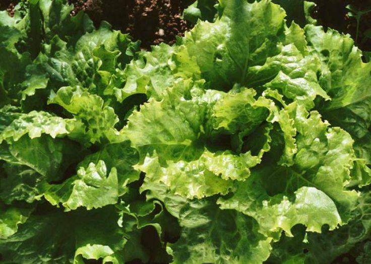 111 best potager carr images on pinterest gardening - Mon carre potager com ...