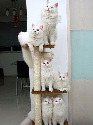 Three tiers of cuteness