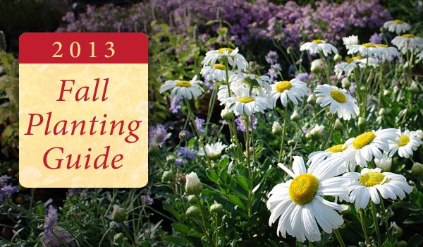 25 Beautiful Fall Planting Guide Ideas On Pinterest Fall Planting Vegetables Winter