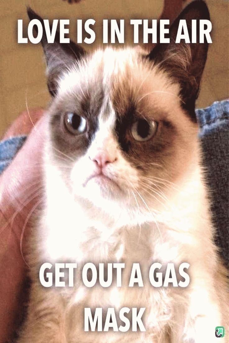 Cat valentine quotes aesthetic Funny quotes grumpy cat