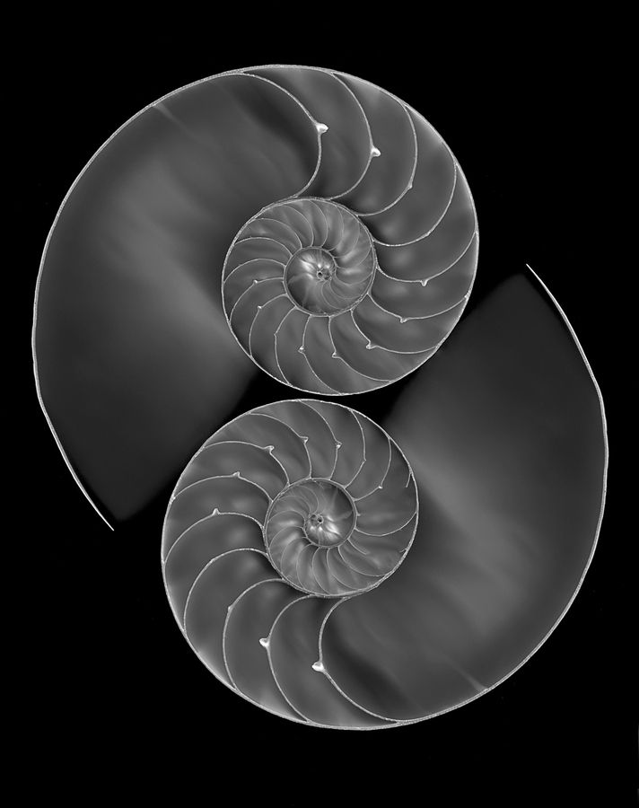 Yin and Yang (by Donald Ogg, via 500px) also a study in fractals ~ Fibonacci Code