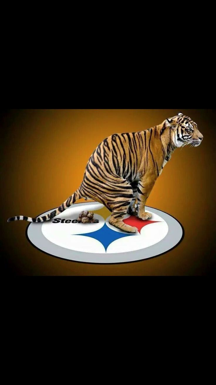 welcome to the jungle  [PHOTO re-pinned, Football Rivals:  Bengals vs. Steelers / whodey]