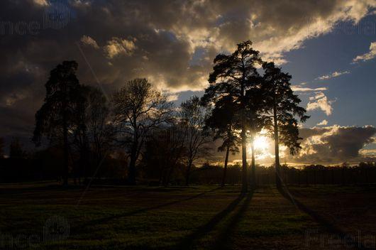 Sunset or sunrise? #sunset #sunrise #shadow #nature #forest #freelance #freelancecreative #freelancediscount