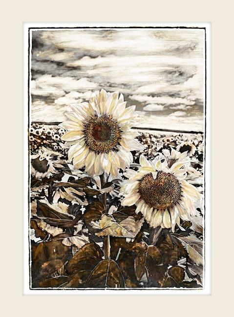 Sunflower Dawn - Marlene Neumann