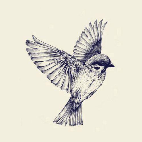 Siebdruck Vogel