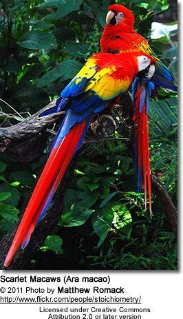 VIDA Foldaway Tote - Tropical Parrots by VIDA H9VxvdEUs