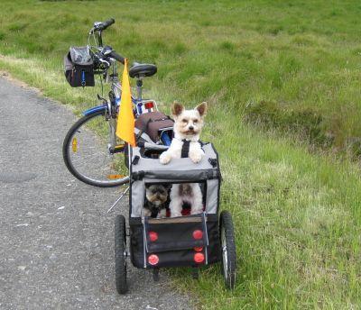 Karlie Fahrradanhänger No Limit Doggy Liner 2 - Amsterdam günstig bei zooplus