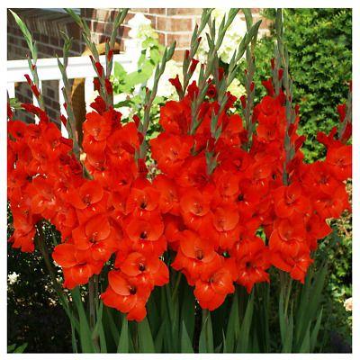 Pin On Home Gardening Beautiful Flowers