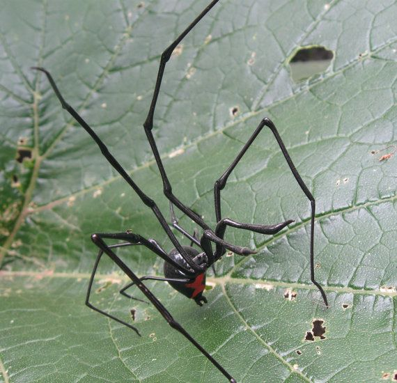 Glass Black Widow Spider by Michael Mangiafico.