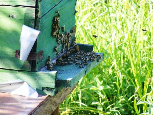 Lovely Ausflugsloch im Bienenstock Das Ausflugsloch bildet den Eingang zum Bienenstock Es sollte nicht zu