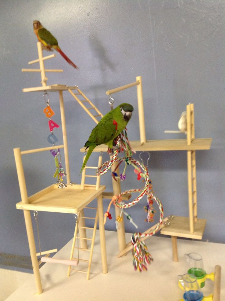 Home Made Parrots Stands