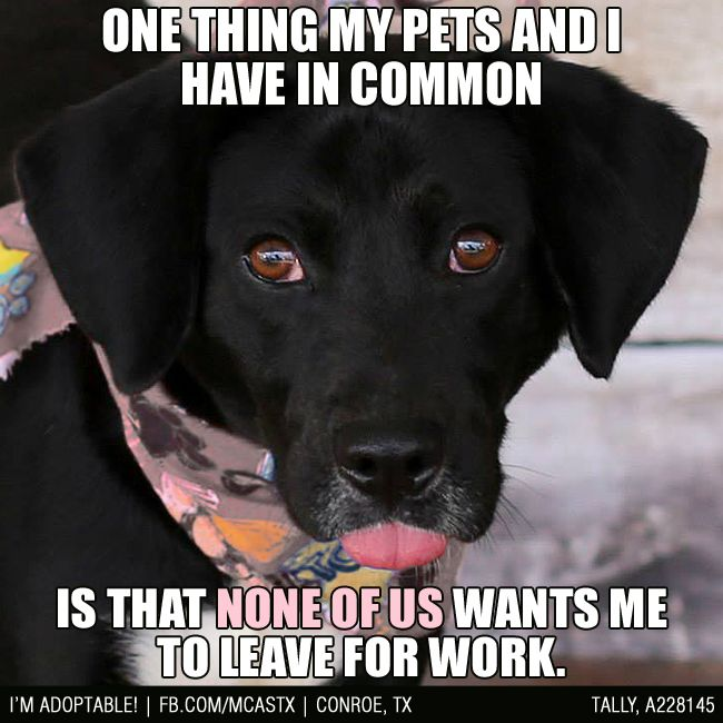 TRUE STORY!!! #funny #dogs #mcaspets