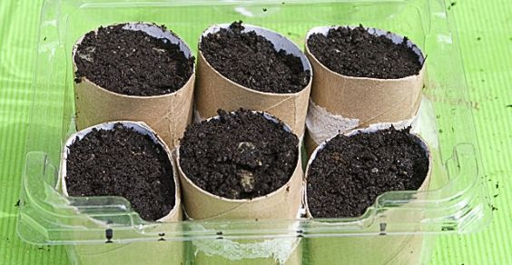 recycling toilet strong paper for seeding and putting in earth directly in an organic way