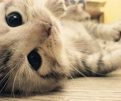 Awwww: Cats, Cuteness, Animals, So Cute, Pet, Adorable, Kittens, Kitty, Eye