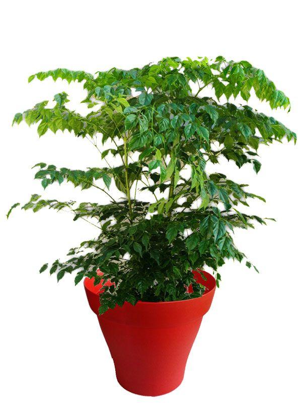 17 meilleures images propos de plantes d 39 int rieur avec for Cache pot interieur